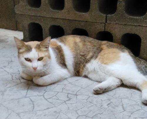 東松山保健所 動物担当さんを訪問