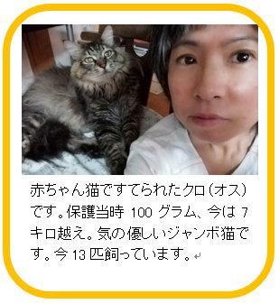 チームCさかど 代表 伊藤民子