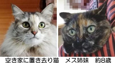 置き去り猫はみなしご栃木に終生でいきました