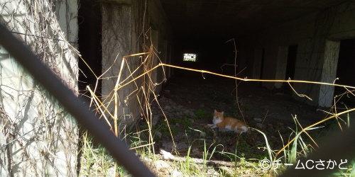 一匹で暮していた穏やかなオス猫