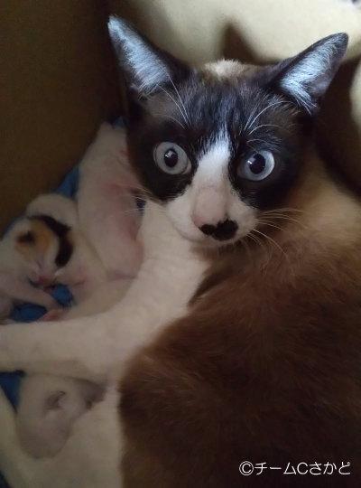 高麗川土手で親子猫保護