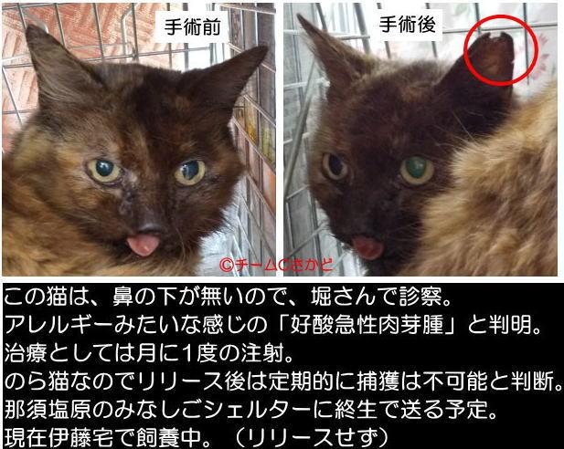 鼻の下のないのら猫
