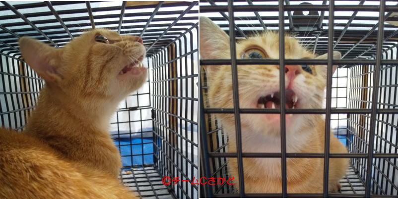 肺炎と心臓疾患で療養の母猫
